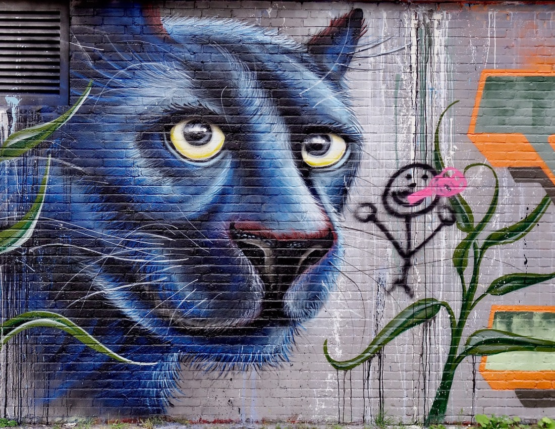 straatkunst-blauwkat - 1